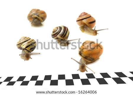Snails racing to the finish line. - stock photo