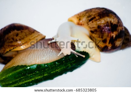 snails with green cucumber isolated