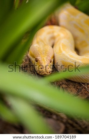 Snake hiding in the grass - stock photo