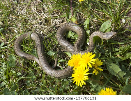 snake in grass and flowers - stock photo
