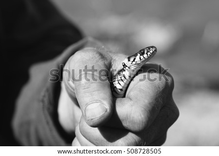 Snake in human hand closeup, black and white.