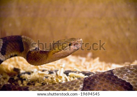 snake in terrarium - stock photo