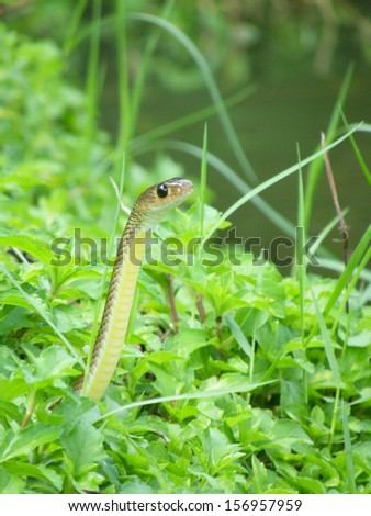 Snake in the grass - stock photo
