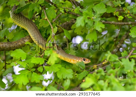 Snake in the tree - stock photo