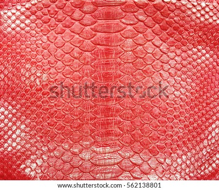 Snake Leather Background and Texture