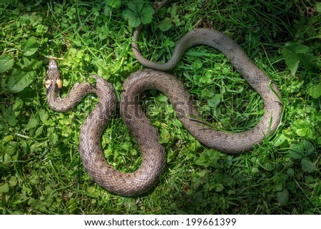 snake on green grass close up - stock photo