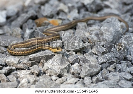snake on the rocks looking at you - stock photo