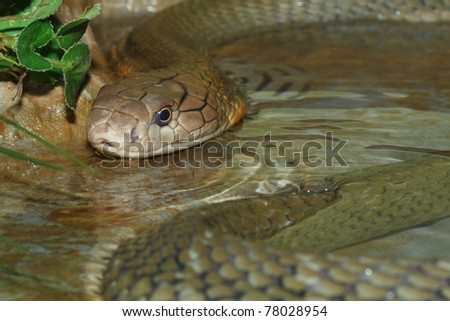 snake on the water - stock photo