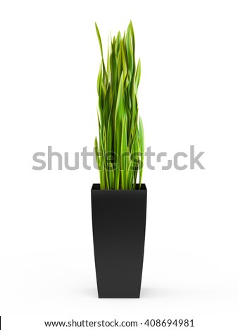 Snake Plant potted plant isolated on white background. 3D Rendering, 3D Illustration.