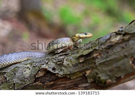 Snake resting on a tree branch