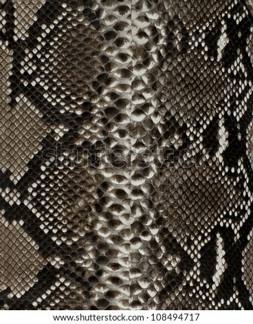 Snake skin background