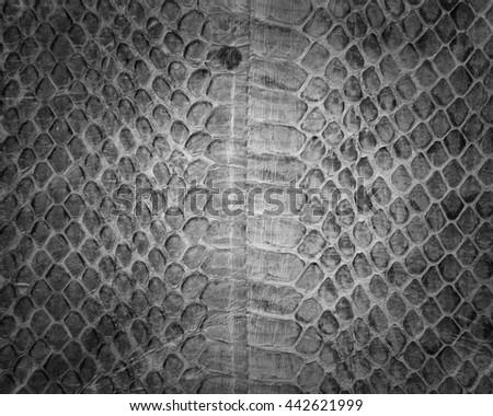 Snake skin background,Snake skin leather texture.Black and white. - stock photo