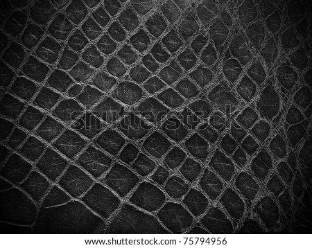 snake skin black and white close up - stock photo