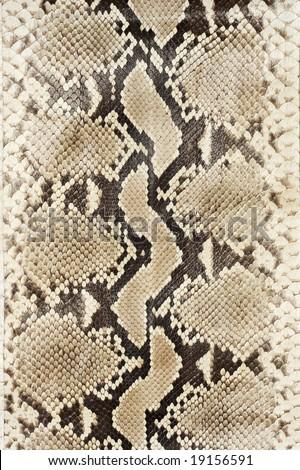 Snake skin leather close-up. - stock photo