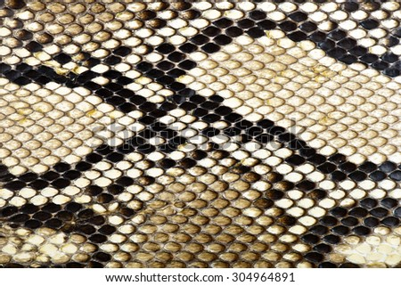 snake skin python for background - stock photo