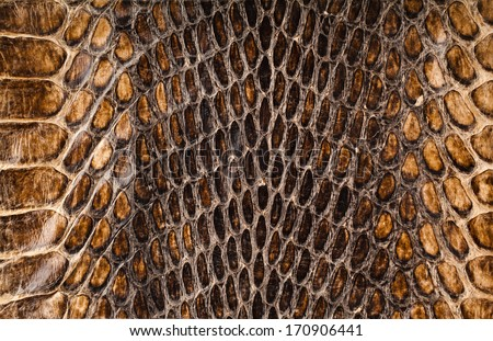 Snake skin surface texture close up for background and wallpaper - stock photo