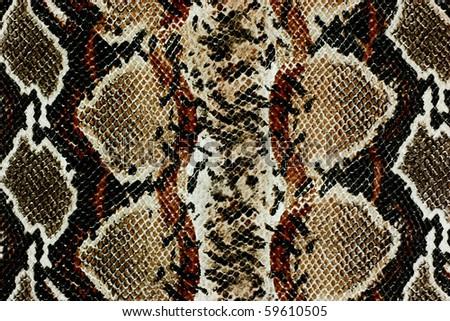 snake skin texture - stock photo