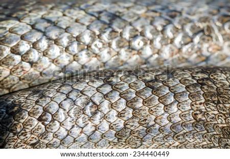 Snake skin texture (Coronella girondica). - stock photo