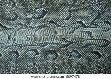 Snake skin texture - natural background - stock photo