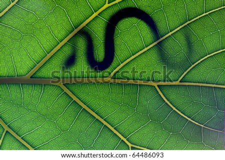 Snake stay on leaf in backlight - stock photo