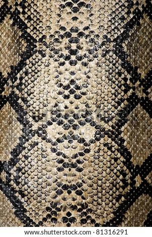 snake texture - stock photo