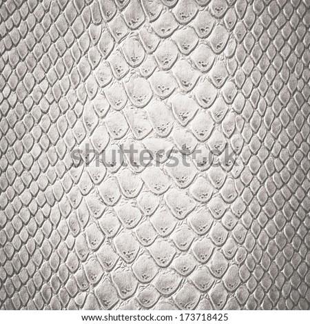 Snake white skin leather texture - stock photo