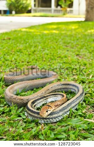 Snakes, venomous reptiles - stock photo