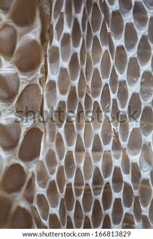 Snakeskin background, closeup in Costa Rica - stock photo