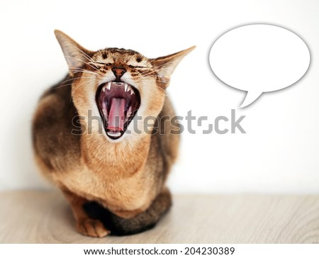 snarling cat  with a small depth of field - stock photo