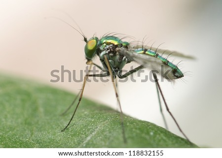Sniper fly - stock photo