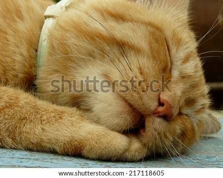 snoring cat muzzle with saggy cheek - stock photo