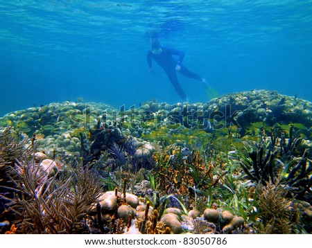 Snorkeler watching a shoal of tropical fish in a beautiful coral reef in the Caribbean sea , Panama - stock photo