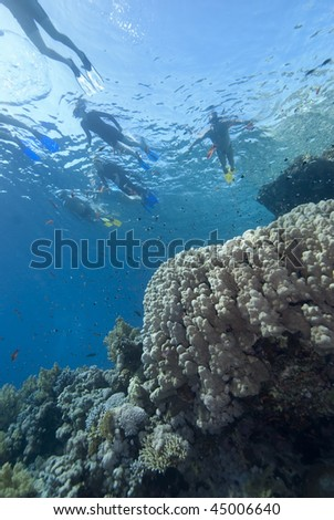 Snorkelers on the surface enjoying the pristine colourful coral reefs of the Red Sea, Egypt. - stock photo