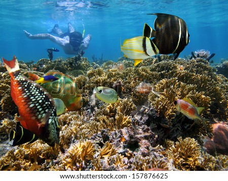 Snorkeling in a coral garden with colorful tropical fish, Caribbean sea