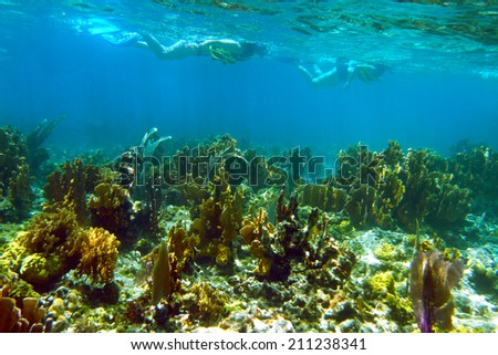 Snorkeling in Cayo Coco. Two girls snorkeling over the coral reef. Shallow focus - stock photo