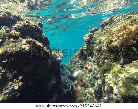 Snorkeling in sicily - stock photo