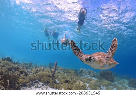 Snorkeling with Sea Turtle in Caribbean - stock photo