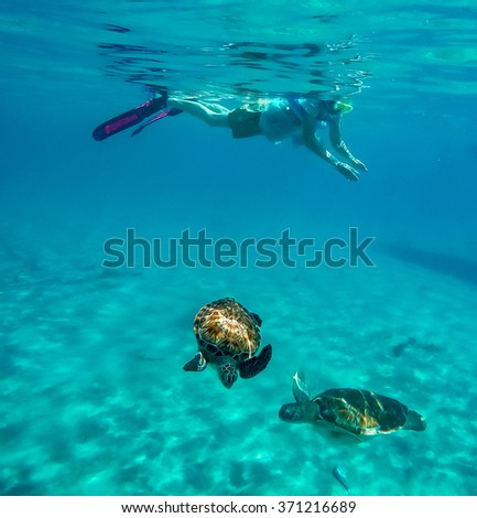 Snorkelling around Westpunt with turtles - Views around Curacao a Caribbean Island