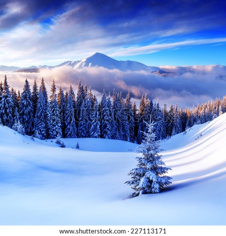 snovy trees on winter mountains - stock photo
