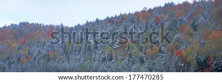Snow and Autumn trees, Adirondack Mountains, New York State - stock photo