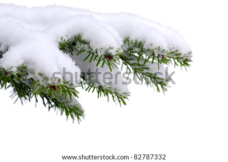 Snow and Christmas  tree  on white - stock photo