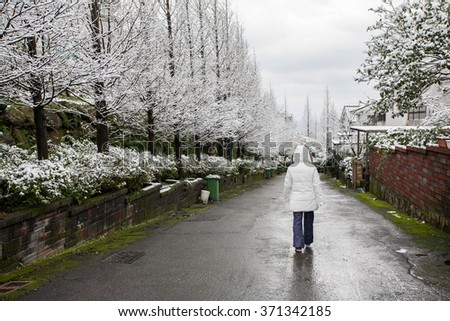 Snow and hoarfrost covered green trees in mountain area. - stock photo