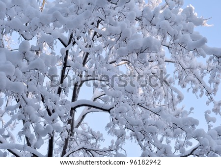 Snow and ice on branches. Russia, Moscow, December - stock photo