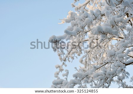 Snow and Ice on Winter Tree Branches Against the Blue Sky - stock photo