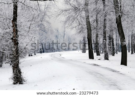 Snow at the park and frosty tree - stock photo