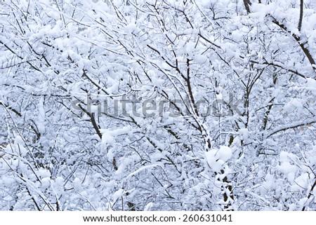 Snow branch - stock photo