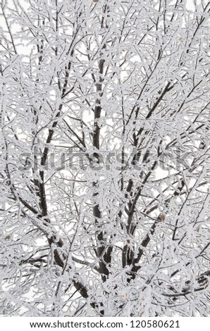Snow Branches - stock photo
