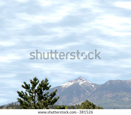 Snow capped San Francisco Peaks with pine tree in foreground.  Shot from Flagstaff, Arizona - stock photo
