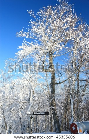 Snow clad tree at the top of Algonquin ski trail at Belleayre Mountain Ski Resort in the Catskills Mountains of New York - stock photo