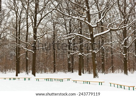 snow covered benches and trees in city park in winter - stock photo